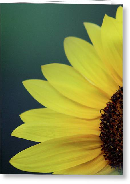 Greeting Card featuring the photograph Pedals Of Sunshine by Cathie Douglas
