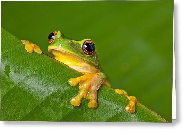 Peek-a-frog Greeting Card