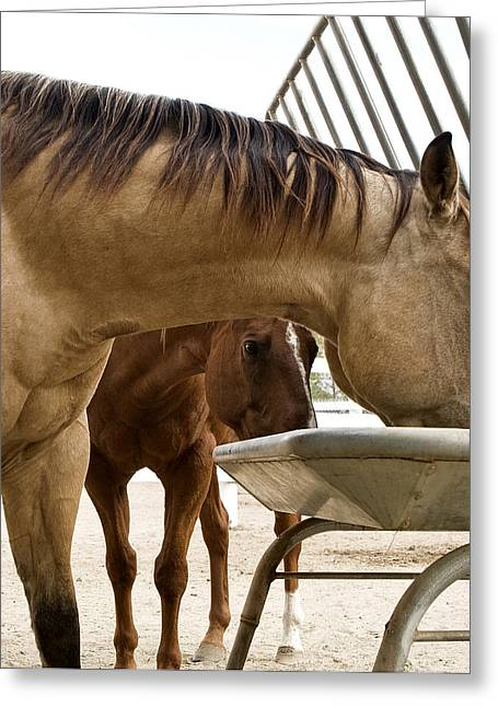 Greeting Card featuring the photograph Peeking Pony by Lorraine Devon Wilke