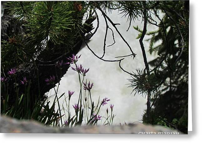 Peeking Waterfall Greeting Card by Chasta Mariah