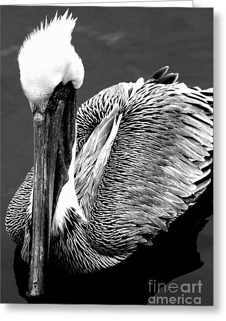 Pelican . 7d8287 Greeting Card by Wingsdomain Art and Photography