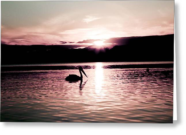 Greeting Card featuring the photograph Pelican At Sunset. by Carole Hinding
