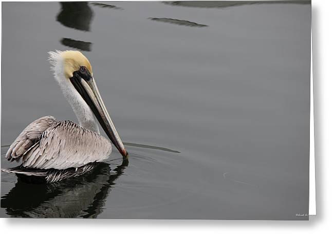 Pelican Beauty Greeting Card by Deborah Hughes