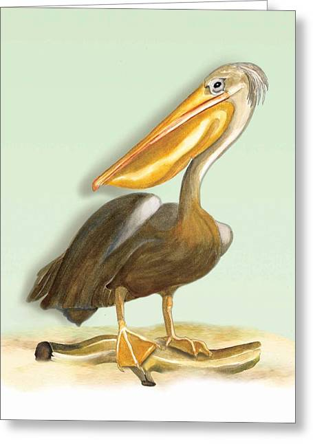 Greeting Card featuring the painting Pelican Bill by Anne Beverley-Stamps