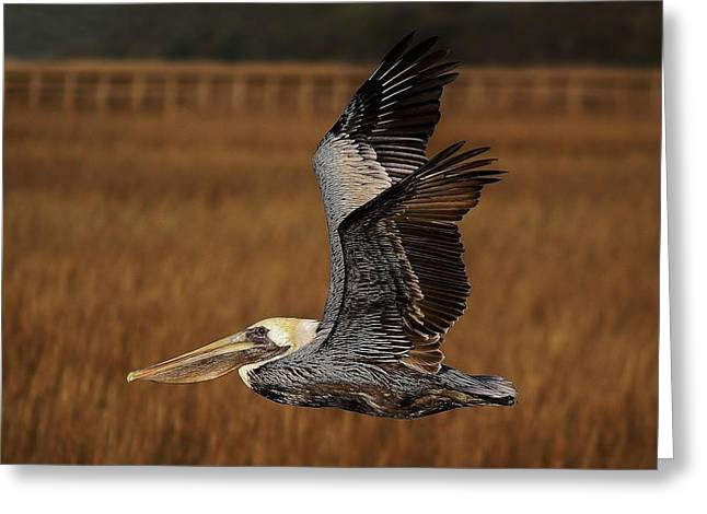 Pelican Flying Through The Marsh Greeting Card by Paulette Thomas