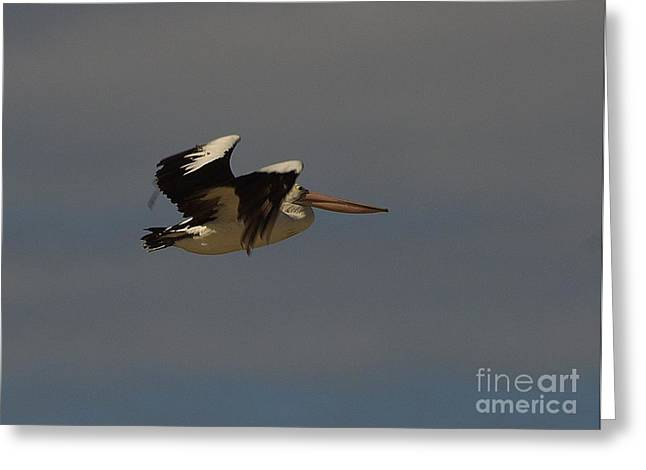 Greeting Card featuring the photograph Pelican In Flight 3 by Blair Stuart