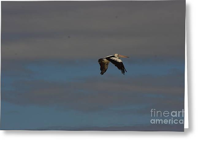 Greeting Card featuring the photograph Pelican In Flight 4 by Blair Stuart