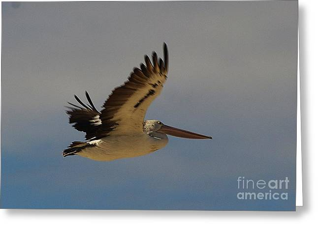 Greeting Card featuring the photograph Pelican In Flight 5 by Blair Stuart