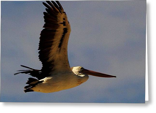 Greeting Card featuring the photograph Pelican In Flight by Blair Stuart