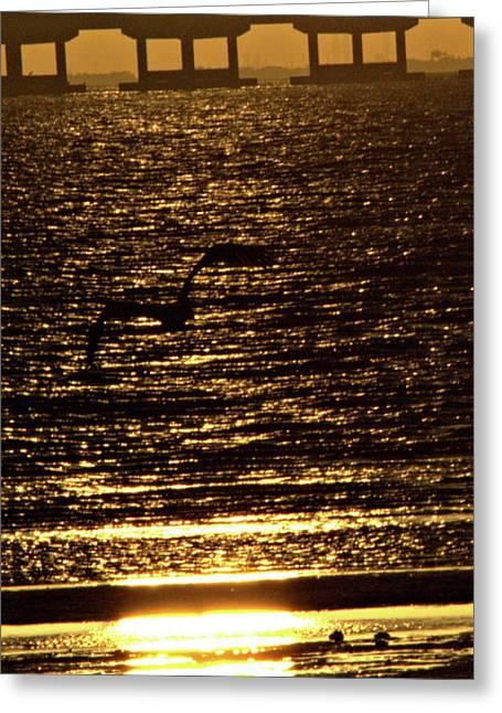 Pelican In Flight Golden Sun Greeting Card by John Wright