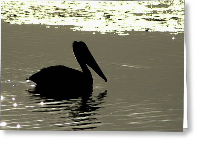 Pelican In Silioutte Greeting Card by John Wright