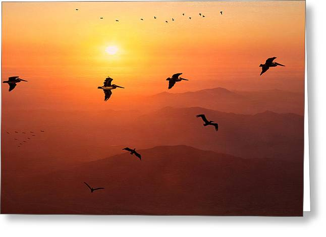 Greeting Card featuring the photograph Pelican Migration by Chris Lord