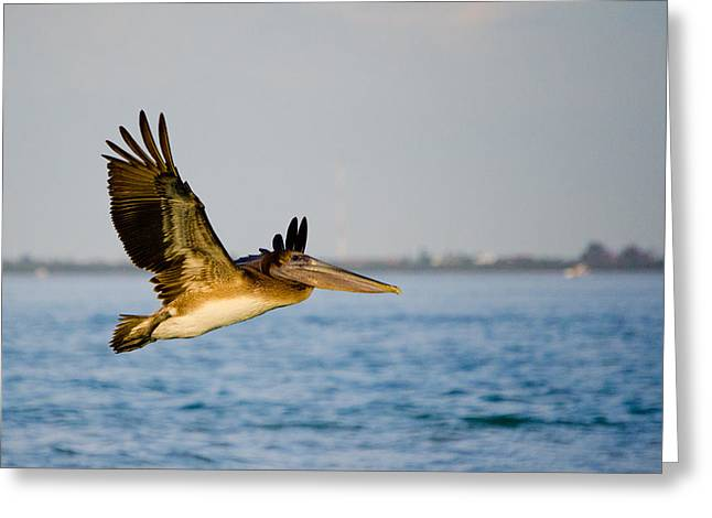 Pelican Greeting Card by Mike Rivera