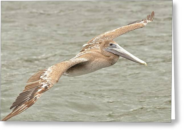 Greeting Card featuring the photograph Pelican On The Water by Rick Frost