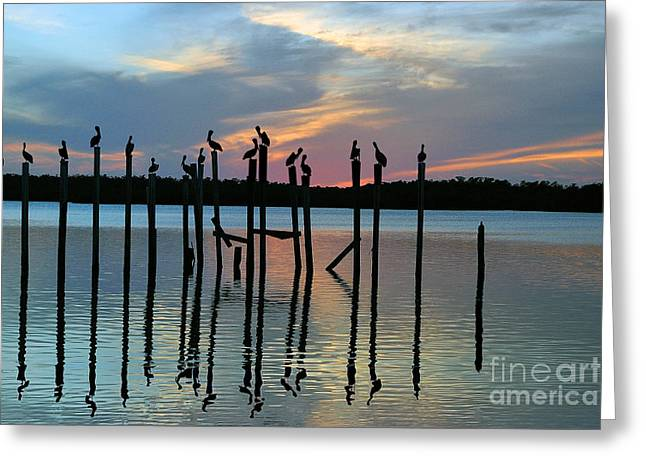 Greeting Card featuring the photograph Pelican Resting End Of Day by Dan Friend