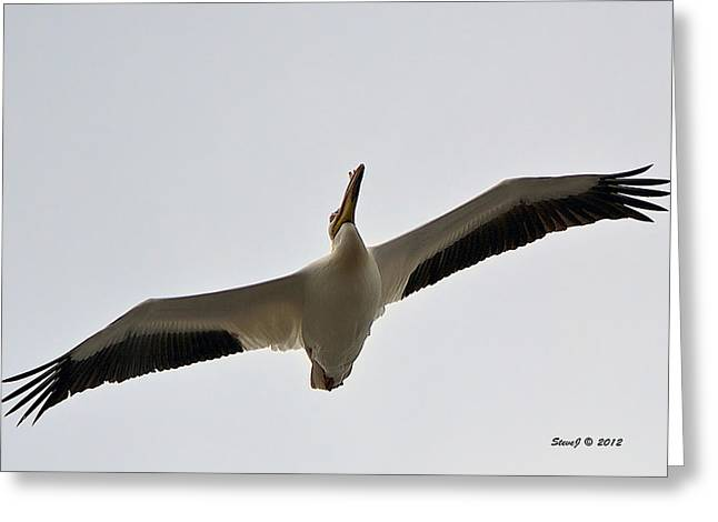 Greeting Card featuring the photograph Pelican Soaring by Stephen  Johnson