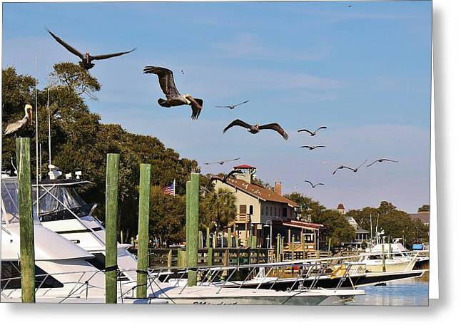 Pelicans Abound Greeting Card by Paulette Thomas