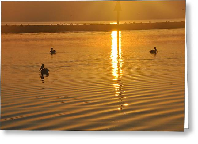 Pelicans And Sunrise Greeting Card