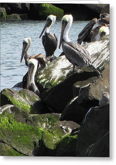 Pelicans At Hammond Greeting Card