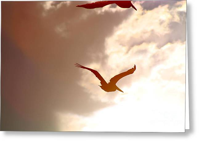 Pelicans At Sunset Greeting Card by Lori Leigh