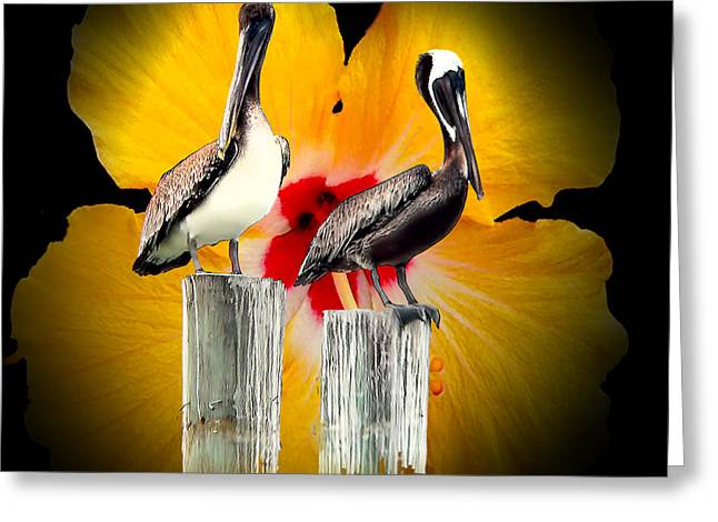 Pelicans Greeting Card
