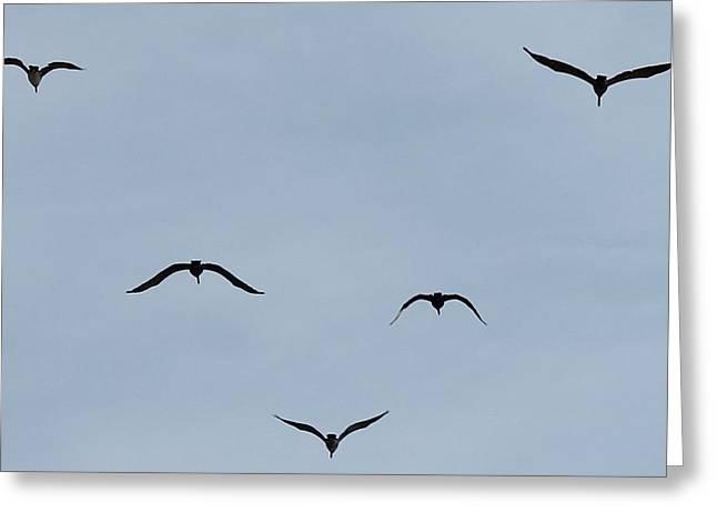 Pelicans In Flight Greeting Card by Lorri Crossno
