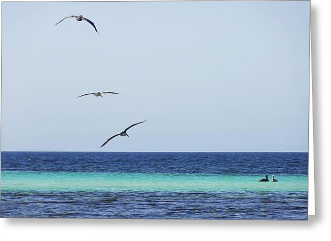 Pelicans In Flight Over Turquoise Blue Water.  Greeting Card by Anne Mott