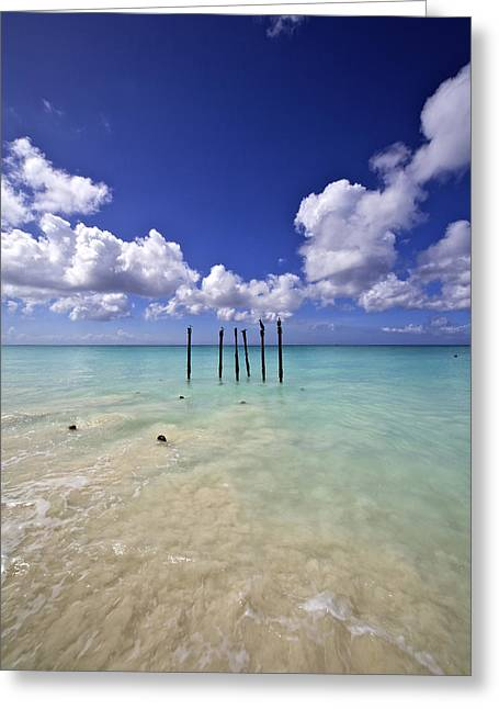 Pelicans Of Sunny Aruba Greeting Card