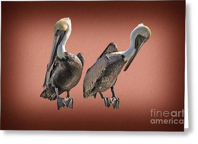 Greeting Card featuring the photograph Pelicans Posing by Dan Friend