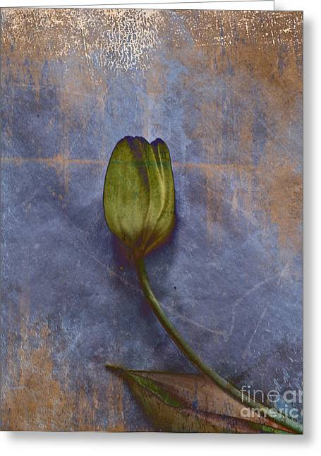 Penchant Naturel - 07at04b3 Greeting Card by Variance Collections