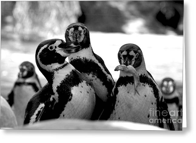Penguins Greeting Card by Pravine Chester