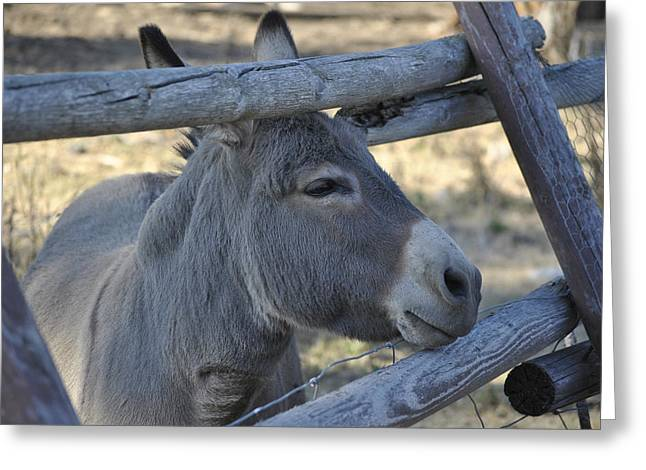 Pensive Donkey Greeting Card