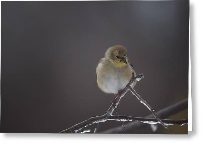 Pensive Greeting Card by Susan Capuano
