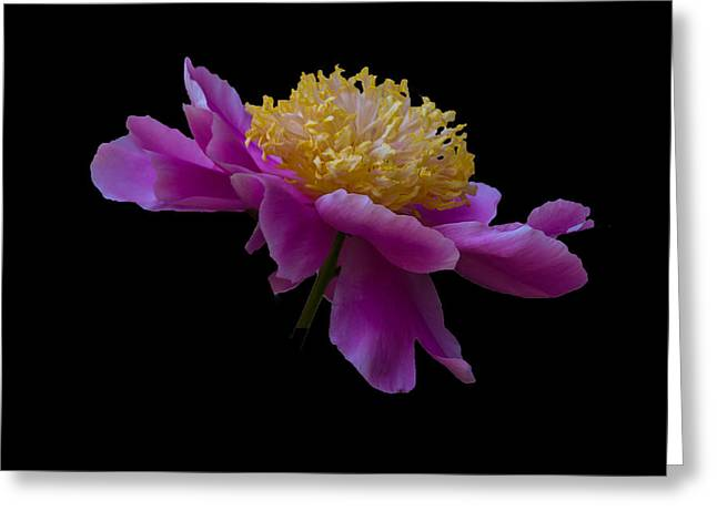 Peony Number One Greeting Card