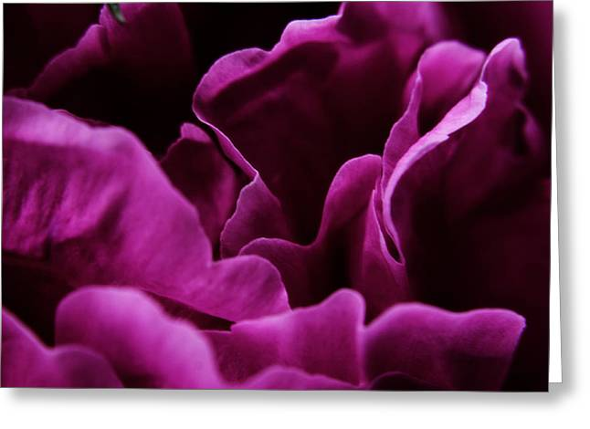 Peony Petals Greeting Card by Scott Hovind