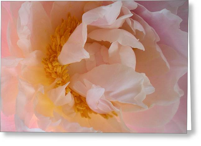 Greeting Card featuring the photograph Peony Pink by Penny Hunt