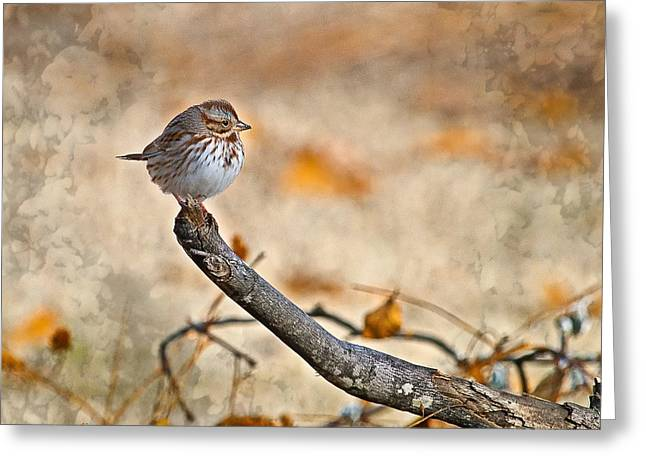 Perched High - Baby Sparrow Greeting Card by J Larry Walker