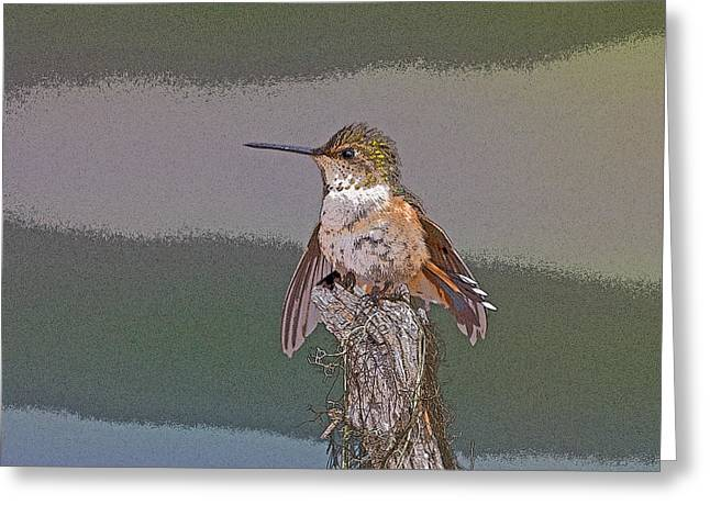 Perched Hummingbird- Abstract Greeting Card by Tim Grams