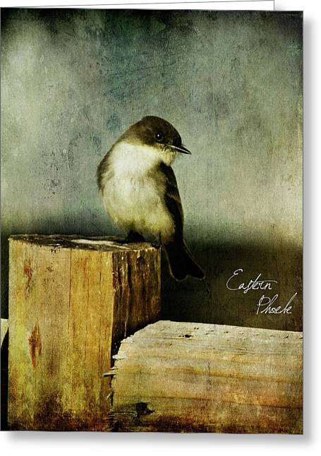 Perched Phoebe Greeting Card