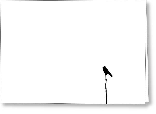 Perched Greeting Card by Tom McCarthy