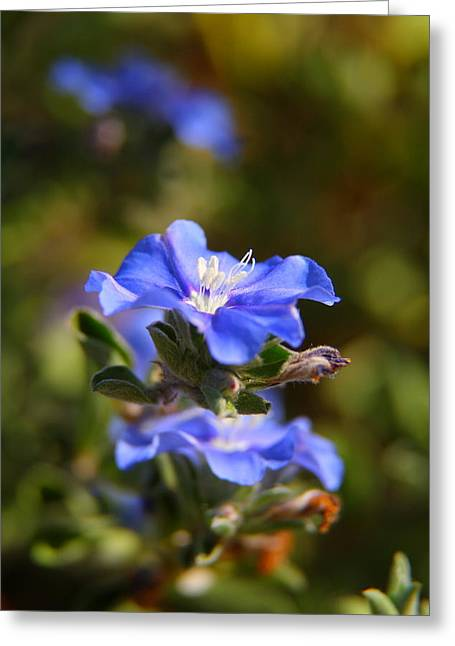 Perennial Blue Flower Greeting Card
