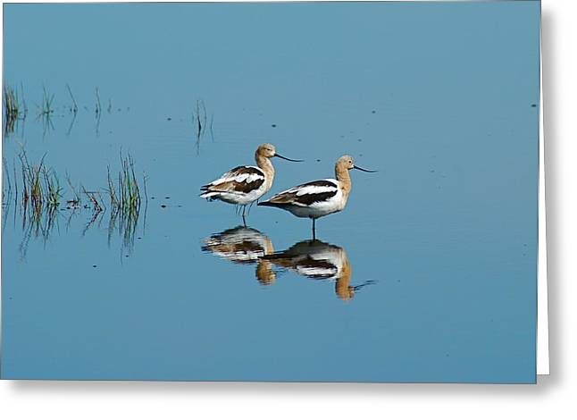 Perfect Reflection Greeting Card by Kathy Gibbons