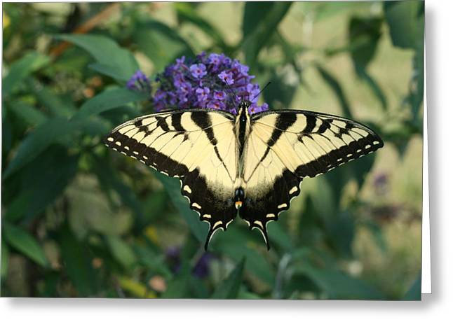 Perfectly Aligned Butterfly On Butterfly Bush Greeting Card by Bonnie Boden