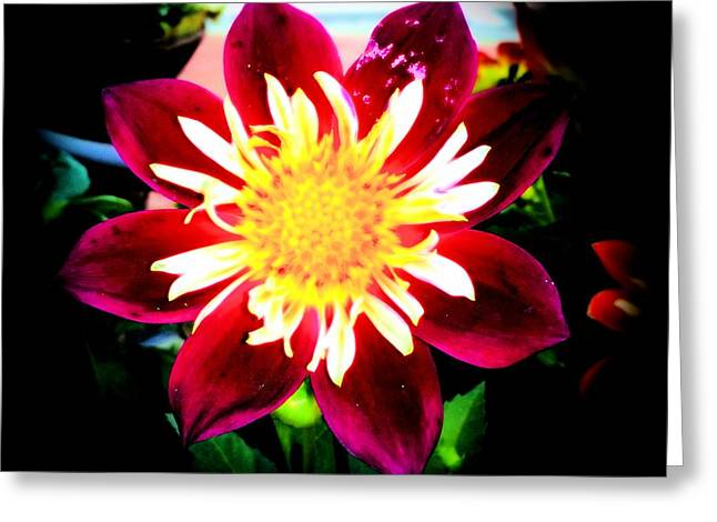 Personally Dahlia Greeting Card