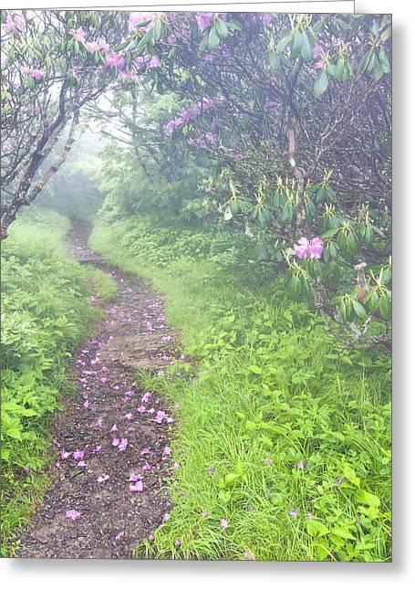 Petaled Path Greeting Card by Rob Travis