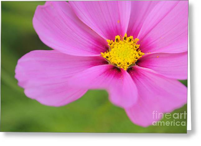 Petaline - P01a Greeting Card by Variance Collections