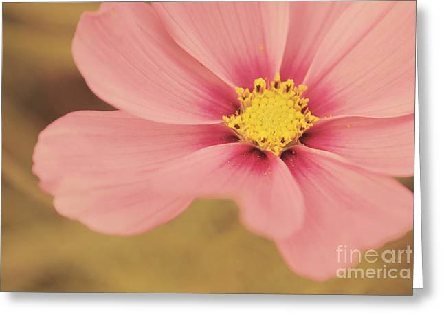 Petaline - P05a Greeting Card by Variance Collections