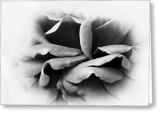 Petals And Shadows Greeting Card