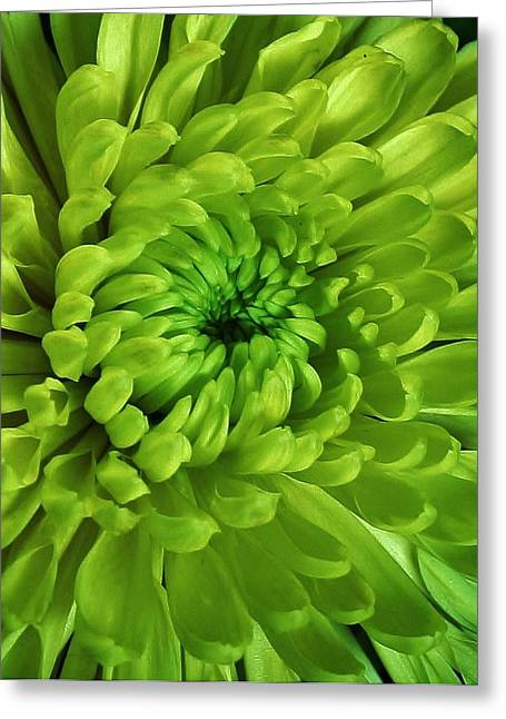 Petals Of Green Greeting Card by Bruce Bley