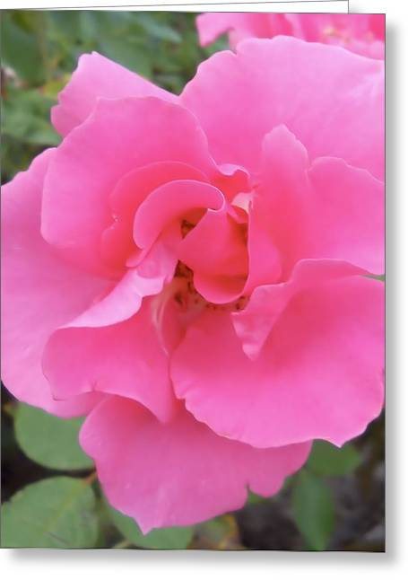 Greeting Card featuring the photograph Petals Of Pink by Lynnette Johns